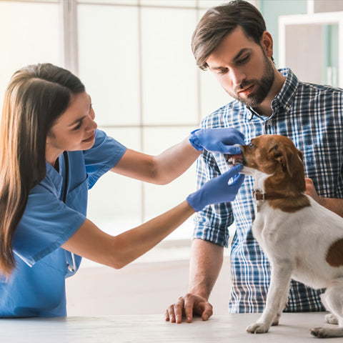 be with your dog during vet visit to make it easier
