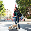 dial-a-distance retractable dog leash on busy street