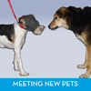 ThunderCap - Dog Calming Cap - Helps When Meeting Other Dogs | T03-GCCXS | T03-GCCS | T03-GCCM | T03-GCCL