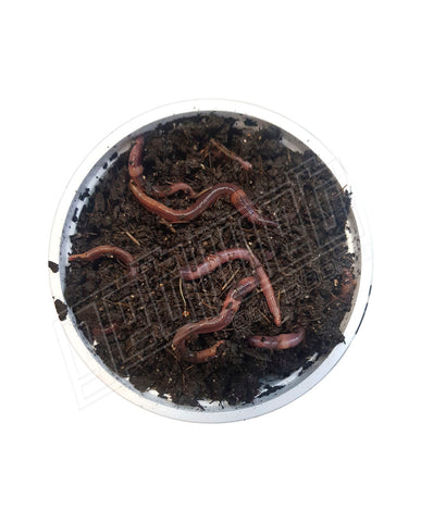 Tub Of Worms