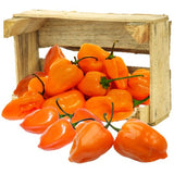 Organic Habanero HOT Peppers - Organic Mountain Farms  - 1