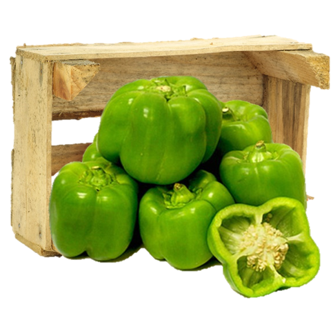 Organic Green Bell Peppers - Organic Mountain Farms