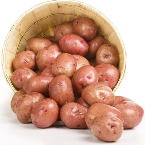 Organic Potatoes - Red Skins - Organic Mountain Farms  - 2