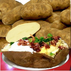Organic Idaho Baking Potatoes - Organic Mountain Farms  - 2