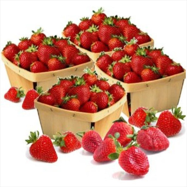 Organic Strawberries - Organic Mountain Farms