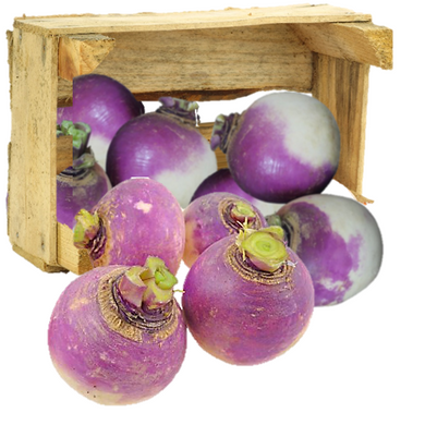 Organic Turnips - Organic Mountain Farms