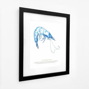 Prawn Watercolour Print SeaKisses Wall Art-SeaKisses