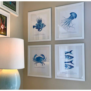 Prawn Watercolour Print SeaKisses Wall Art