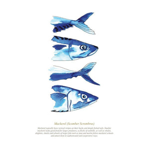 Mackerel Watercolour Print SeaKisses Wall Art