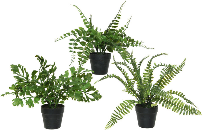Artificial fern plants, no hassle plants add a splash of green indoors or out