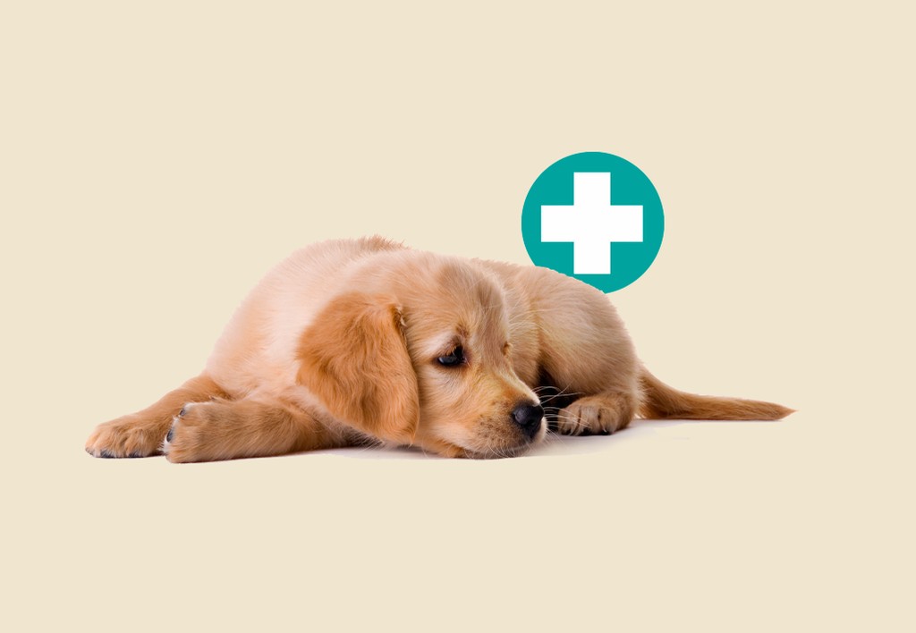 Furbabies First Aid
