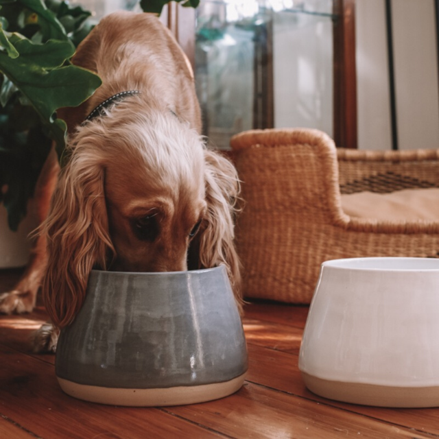 Long-Eared Ceramic Dog Bowl (Galaxy)