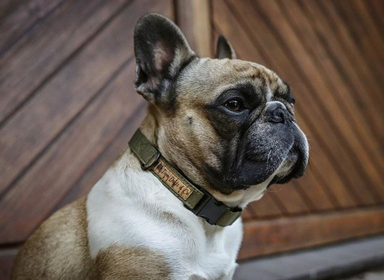 Cork Collars by Two Dogs & Co