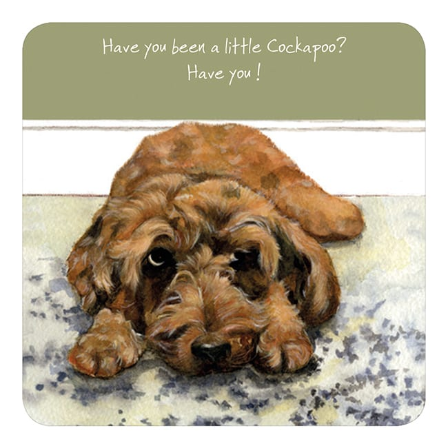 Coaster - Have you been a little Cockapoo