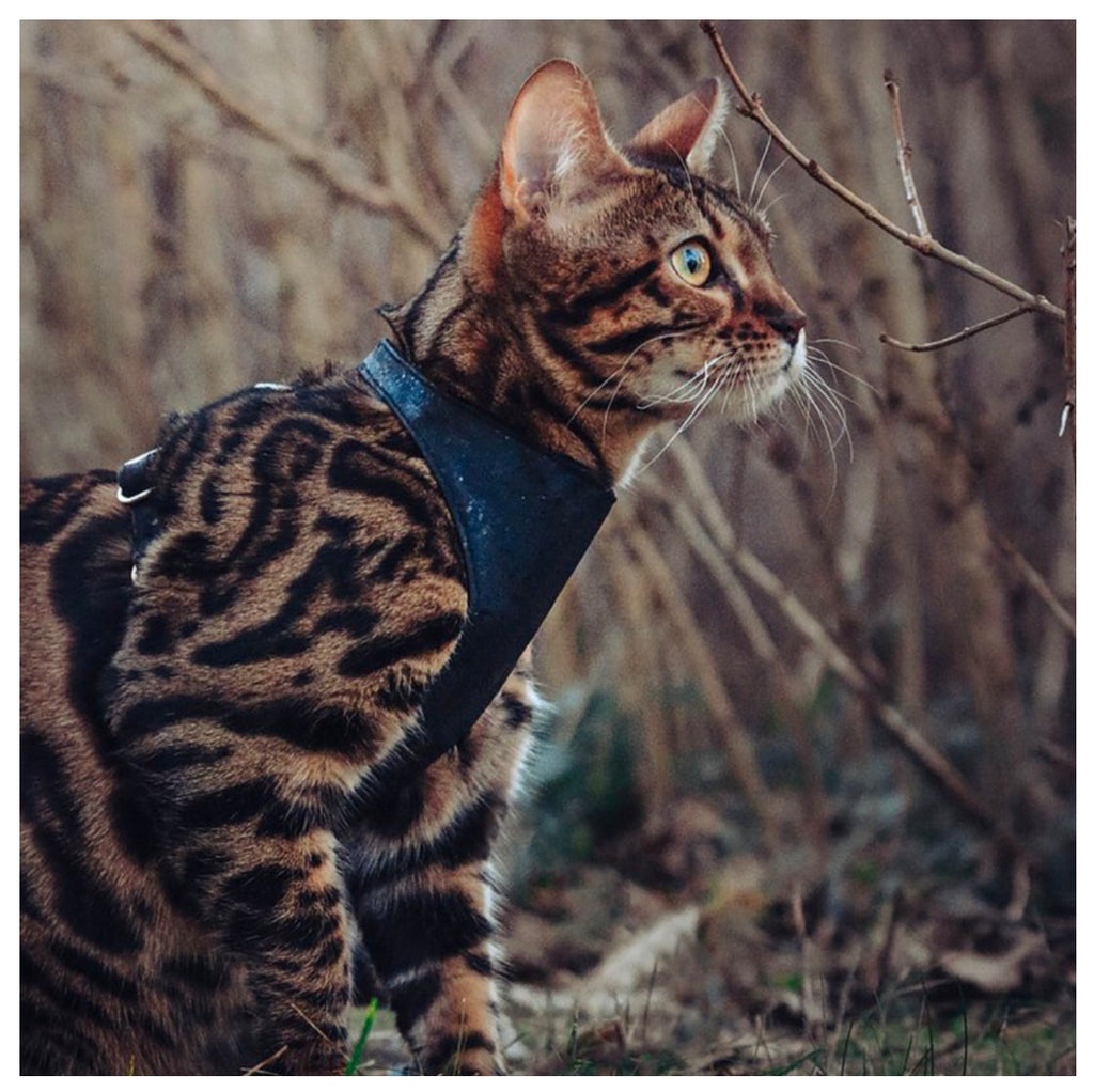 Cat Vest Harness - Cork