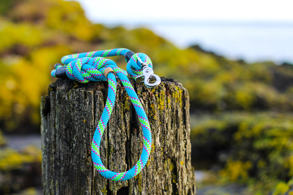 Hiker Hounds Climbing Rope Lead