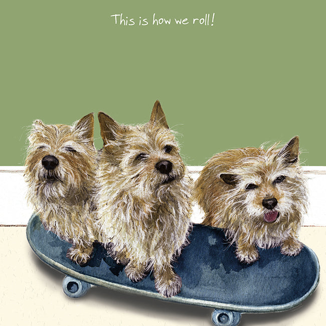 Norwich Terriers Greeting Card – Skateboard