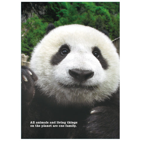 Greeting Life A4 Clear Folder Double Poket Panda FA4W-63-PA