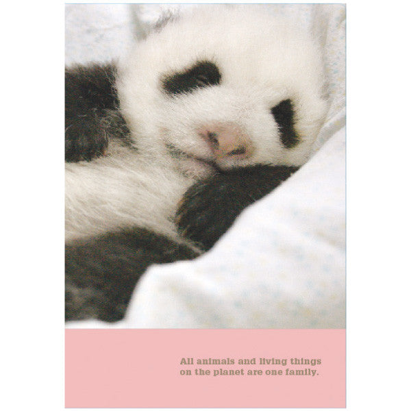 Greeting Life Clear Folder A6 Double Poket Panda FA6W-67-PA