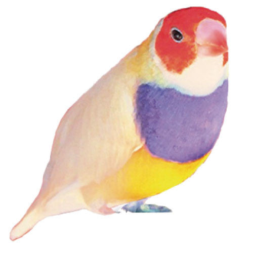 Greeting Life Bird Name Card NC-45