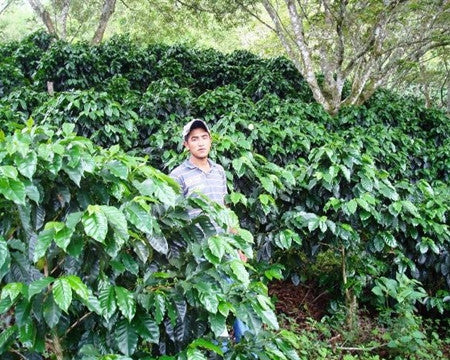 El Salvador Santa Emilia Estate