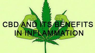 CBD and its Benefits in Inflammation | No1 CBD