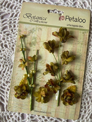 Petaloo - Botanica Collection - Faux Dried Floral Ephemera - Green