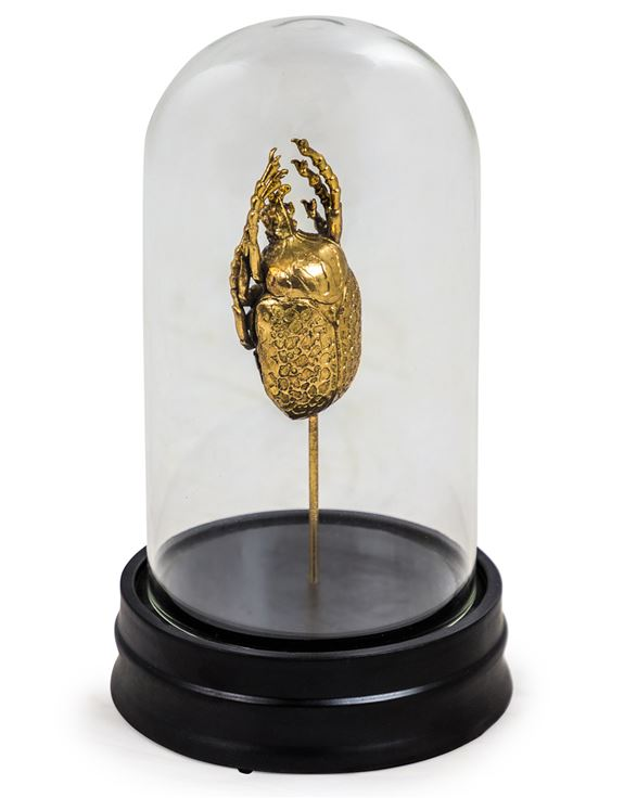 GOLD BEETLE IN GLASS DOME