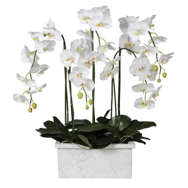 White Orchid Phalaenopsis Plant in Marble Look Planter