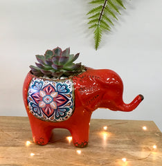 Red Elephant Succulent Planter
