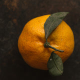 Orange, citrus sinesis, Mirapur™ Essential Oil