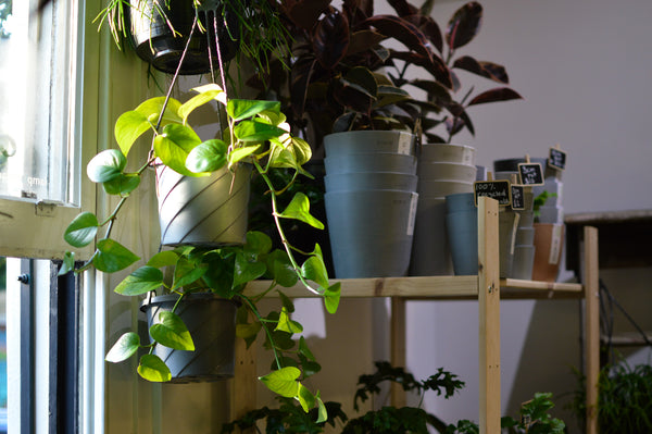 5 tips to nail your indoor plant watering