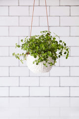 Dotty Hanging Pot