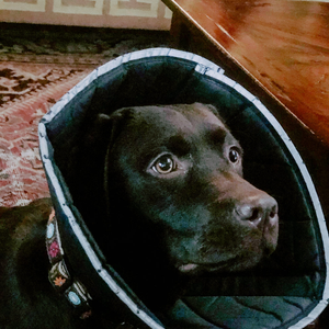 Dealing with a Cone After Surgery