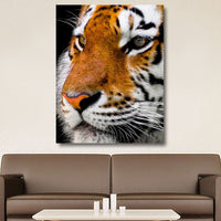 Tiger Images Pictures Of Tigers For Walls Wallpaper Photos Photography Drawing Paintings Decor Artwork Gifts Poster Prints Canvas Portraits