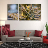 Marijuana Ganja Weed Cannabis 420 1, 2, 3, 4 & 5 Piece Canvas Wall Art Decor Posters Photos Prints Artwork Wallpaper Pictures Multi Panel