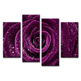 Purple Violet Rose Flower Raindrops Framed 4 Piece Nature Canvas Wall Art Image Picture Wallpaper Mural Artwork Poster Decor Print Painting Photography