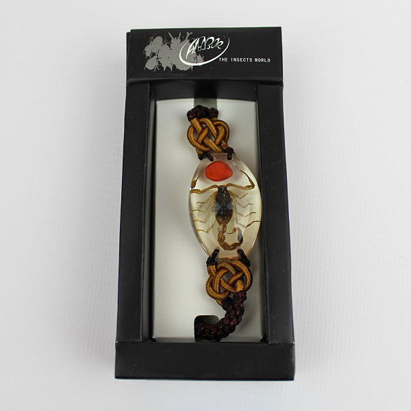 Real Insect 'Scorpion' & Lucky Bean Clear Bracelet