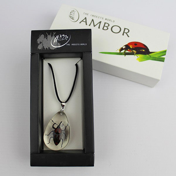 Real Insect 'Long Arm Bamboo Weevil' Clear Necklace