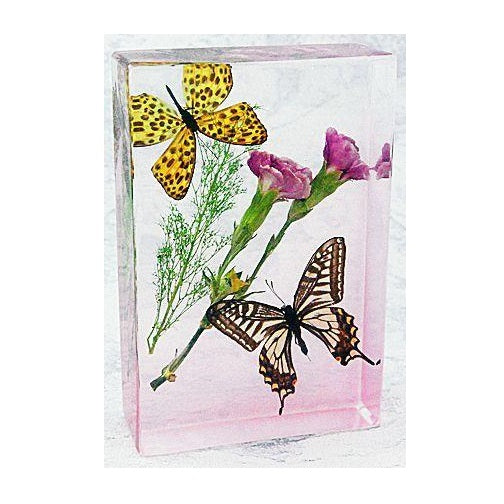 Asian Swallowtail Butterfly Paperweight