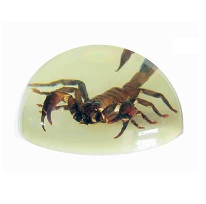 Glow In The Dark Scorpion Paperweight