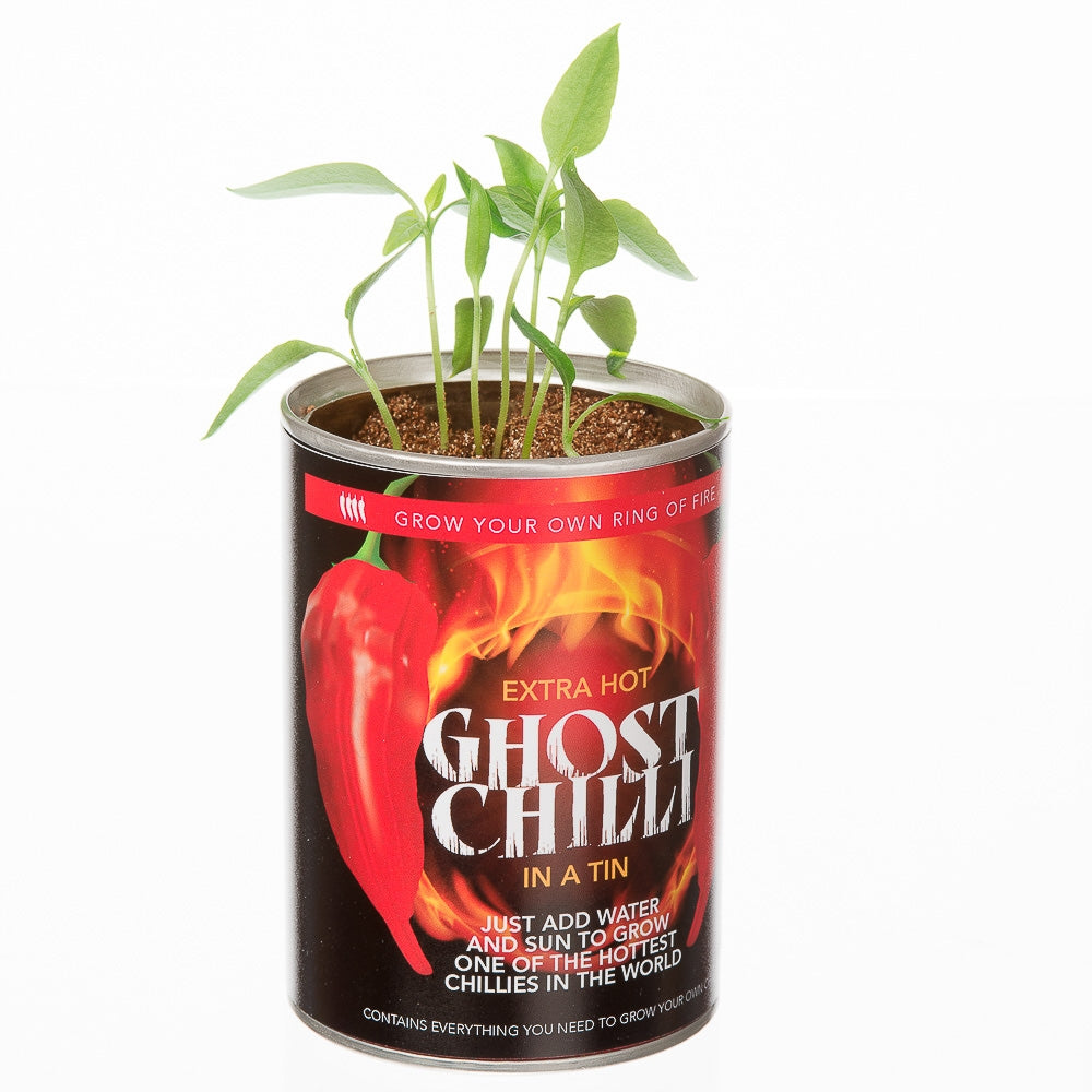 Grow Your Own Extra Hot Ghost Chilli