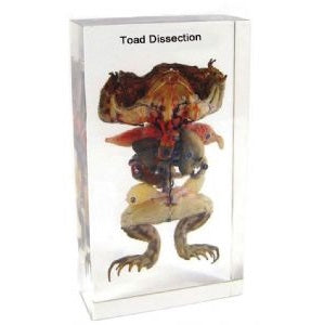 Toad Dissection Block