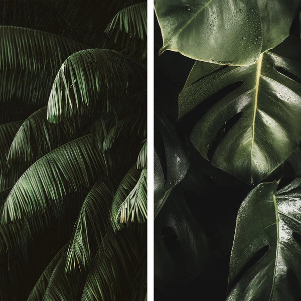 Tropical Collection - Junglepresets
