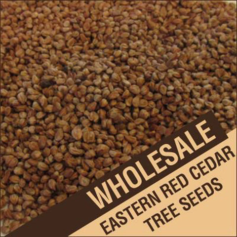 Wholesale Eastern Red Cedar Tree Seeds, Juniperus Virginiana