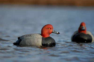 Avery/GHG Oversize Redhead Duck Decoys 3 pack