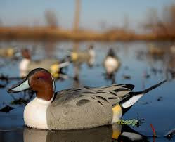 Avery/GHG Life-Size Pro Grade Pintail Duck Decoys 6 Pack