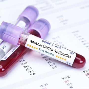Adrenal Cortex Antibodies Blood Test
