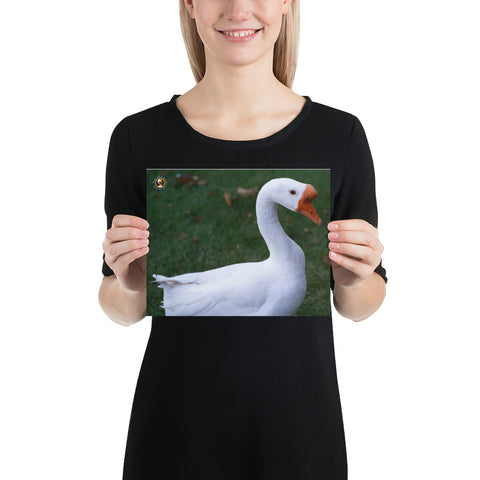 Pet Goose George – Photo paper poster accessories