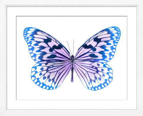 Pale Purple Butterfly